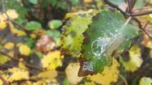 Høstblad. Fotograf: Amelie Wigum