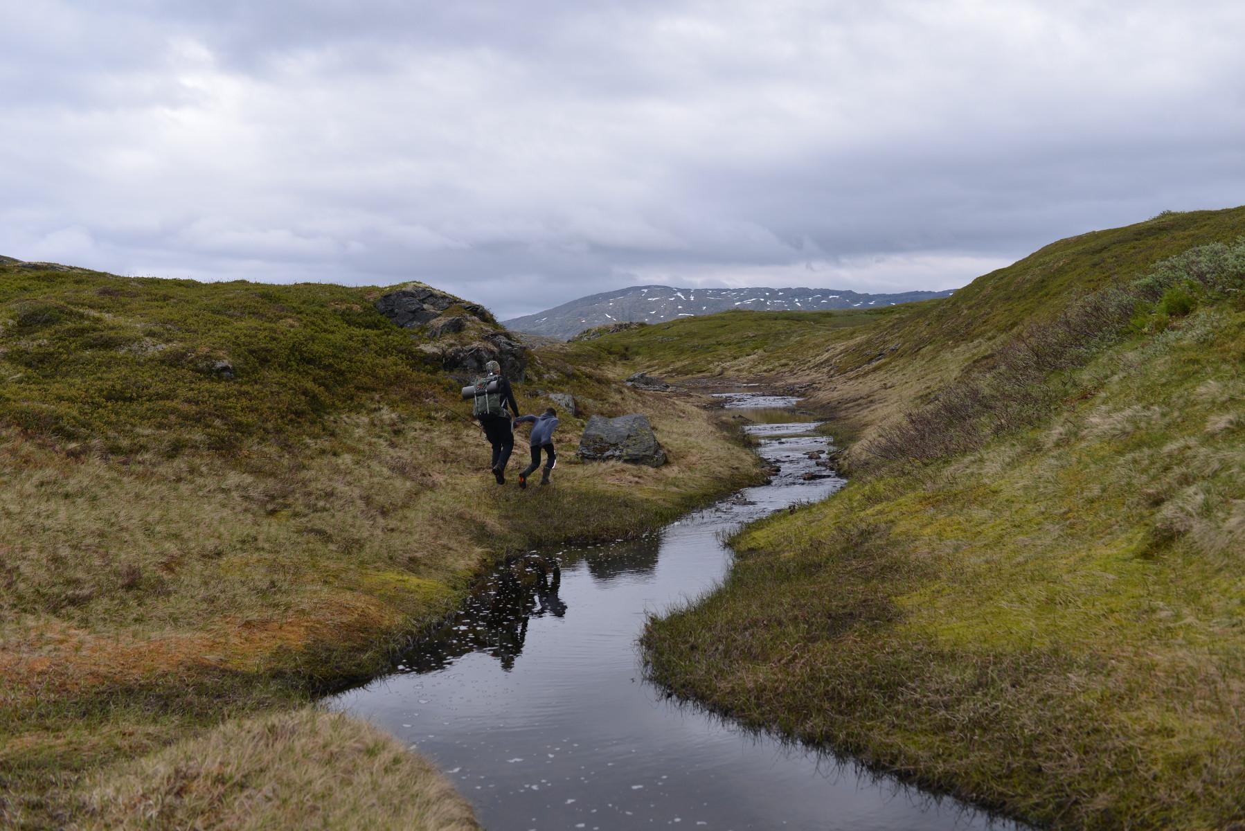 Fra Langøydalen i juni. Fotograf: Kaj Fredrik Johansen