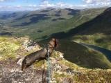Turkompis Lars på Vassdalsfjellet. Fotograf: Leif Øyås