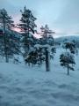 Vinter i Vindøldalen. Fotograf: Liv Lervik