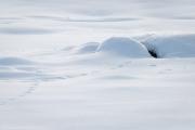 Harespor i snøen. Fotograf: Sylvain Troger