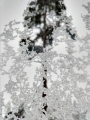 Snø, 24. desember 2018. Fotograf: Sunniva Wigum