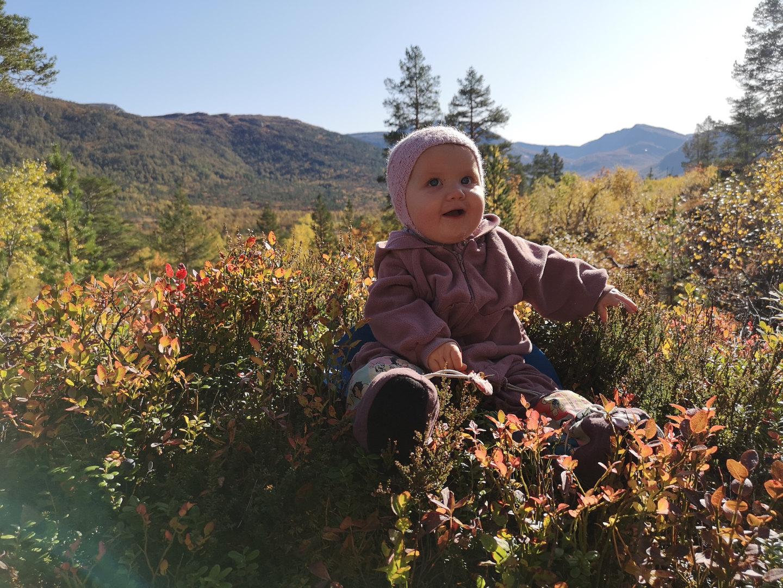 Ella 1 år koser seg ein fin haustdag i Vindøldalen, 25. september 2019. Fotograf: Ane Mogstad Strand