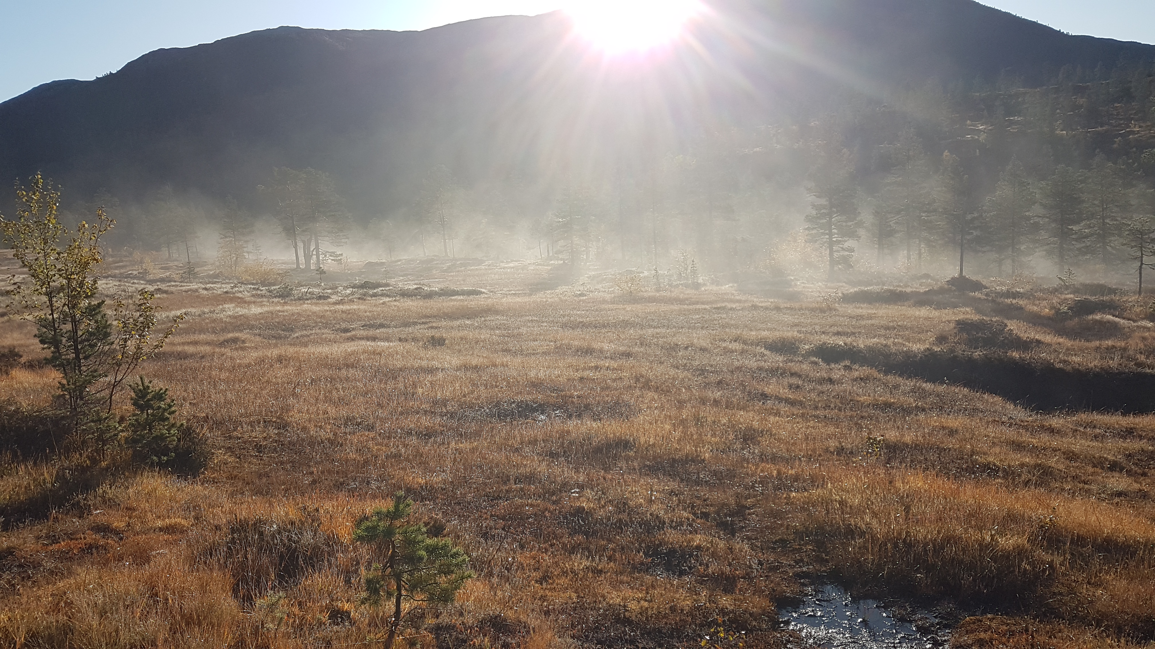 Alvedans i Harangsdalen, 24. september 2019. Fotograf: Arnfinn Hanson