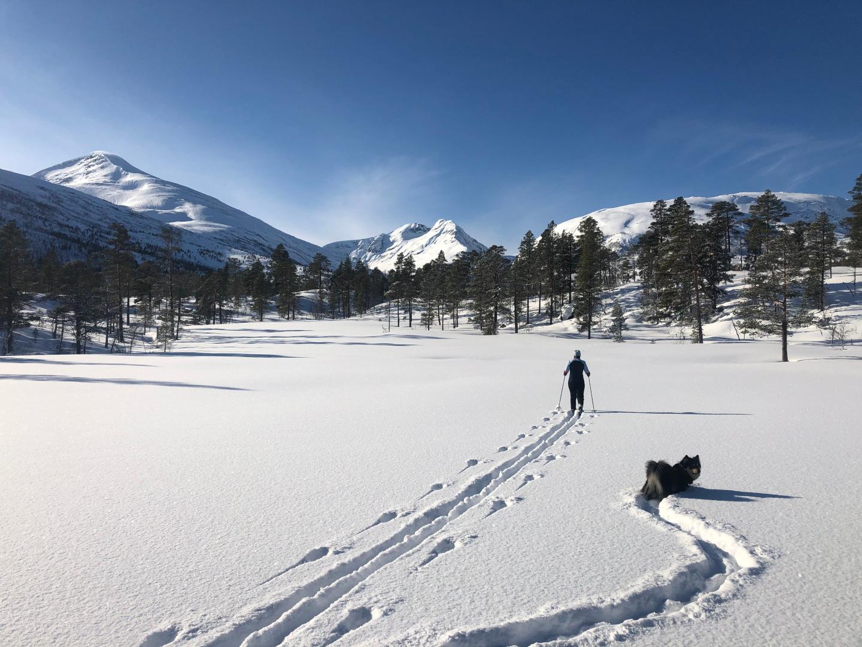 På skitur mot Eiterdalen i perfekt vintervær, 29. februar 2020. Fotograf: Arne Røv
