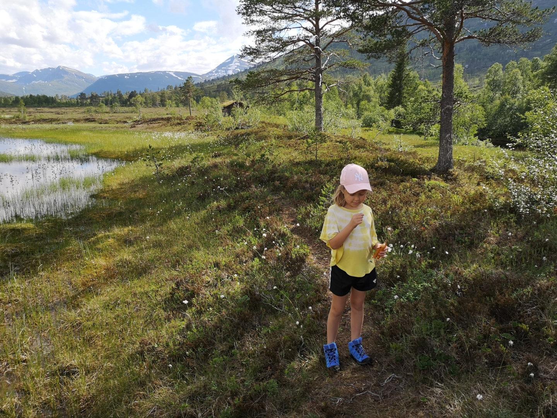 Blikkfang innover dalen fra Holmanmyra, 16. juli 2020. Fotograf: Marit Sveen Kvande